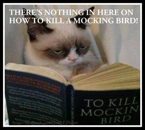 theres-nothing-in-here-on-how-to-kill-a-mockingbird-grumpy-cat